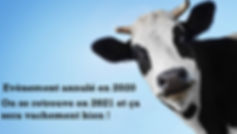 Cow-head-face_2560x1440.jpg