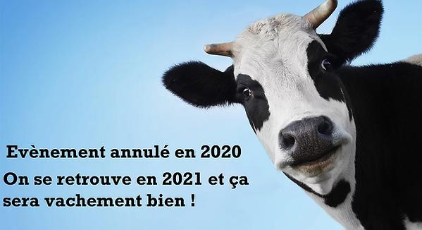 Cow-head-face_2560x1440.webp