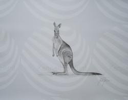 118 Kangaroo
