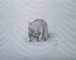 115 wombat