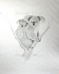 81 Koala