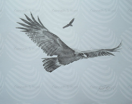 117. Wedgetail Eagle