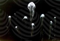 99 Jellyfish.JPG