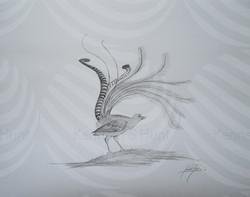116 Lyrebird