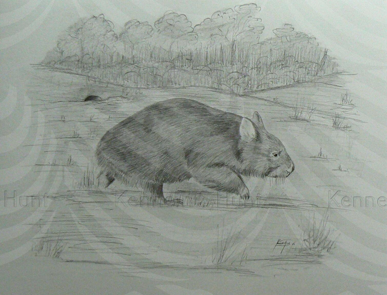 94 Wombat