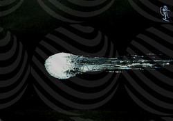 74 Jellyfish3