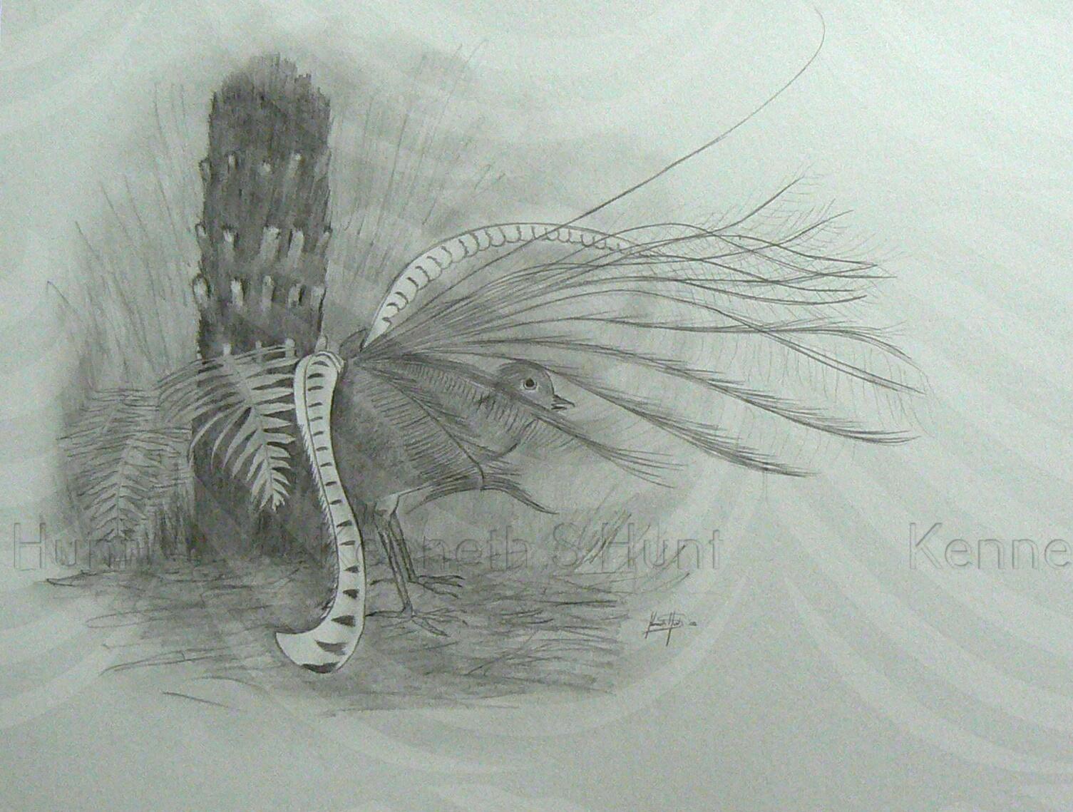 82 Lyrebird