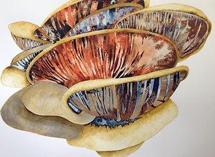 oyster mushroom.jpg