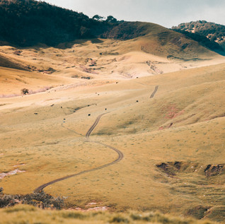 Ranch Shots-3.JPG