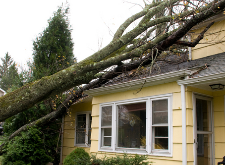 Homeowners Insurance debacle?