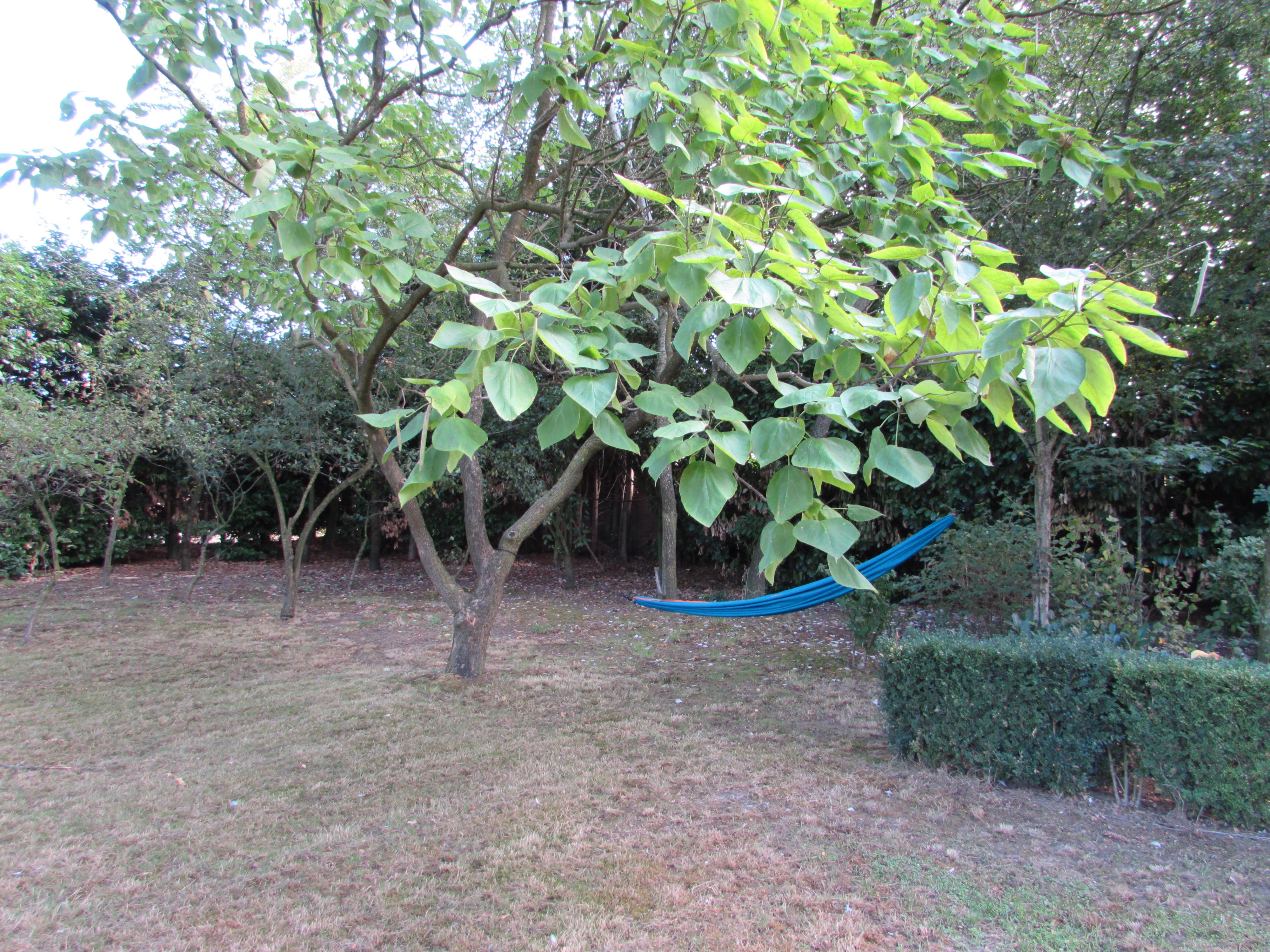 Hangmat tussen fruitbomen - kopie