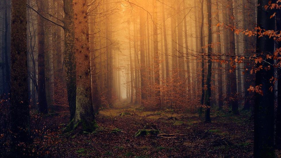 forest-3119826_1920.jpg