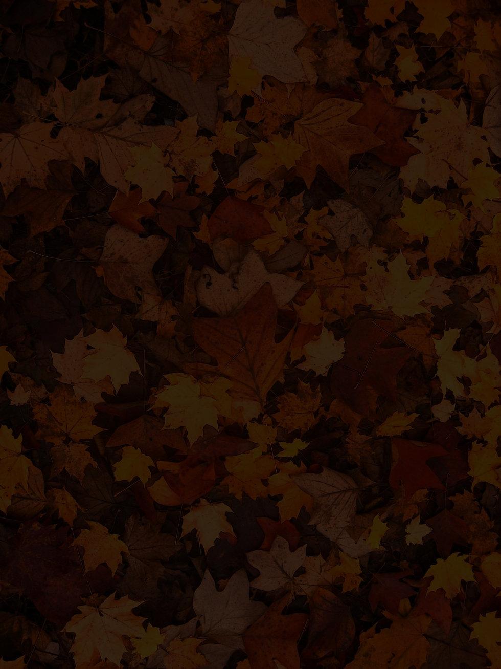 fall-foliage-111315_edited.jpg