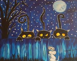 Drei schwarze Katzen