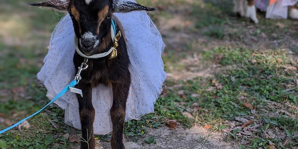 Painting with Goats- Dia de los Muertos (Martindale/San Marcos)