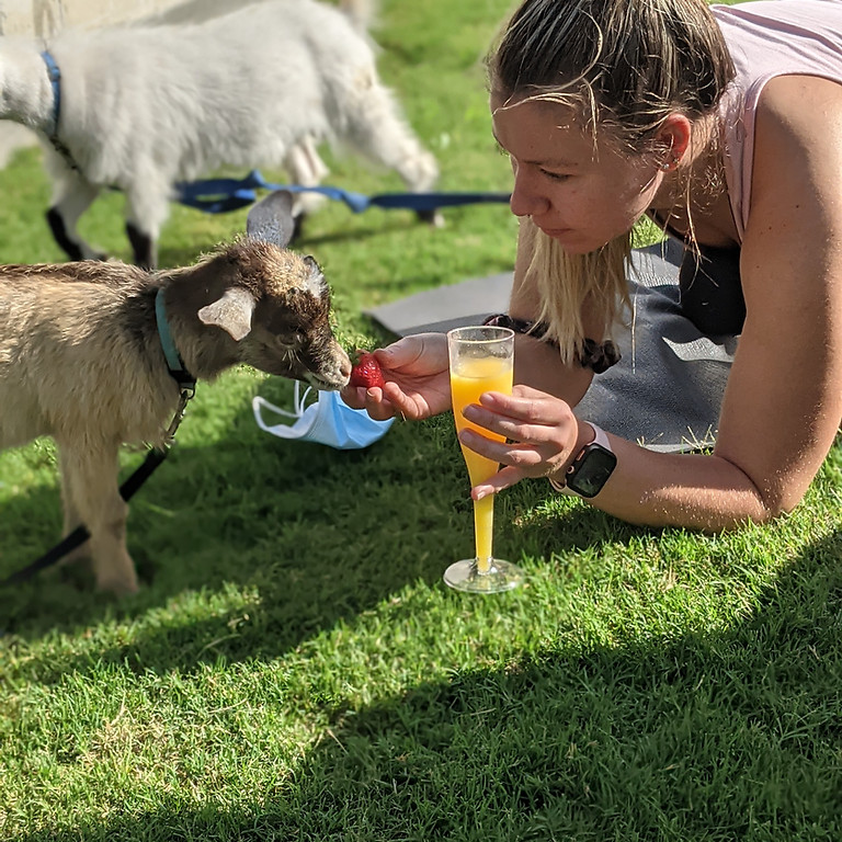 Goat yoga and Smoothies...and mimosas! (Cibolo/New Braunfels)