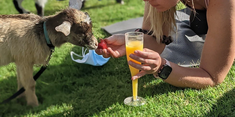 Goat yoga and Smoothies...and mimosas! (cibolo)