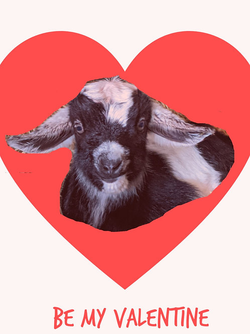 Valentine's Goat Gram