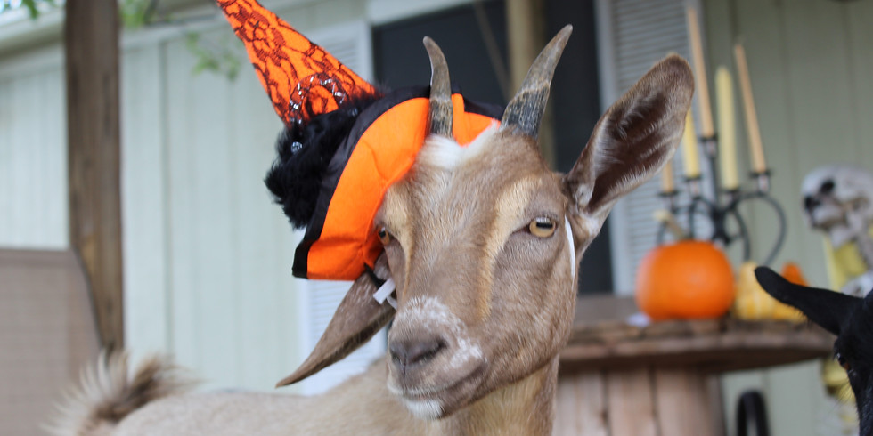Painting with Goats, Halloween Edition (Martindale/San Marcos)