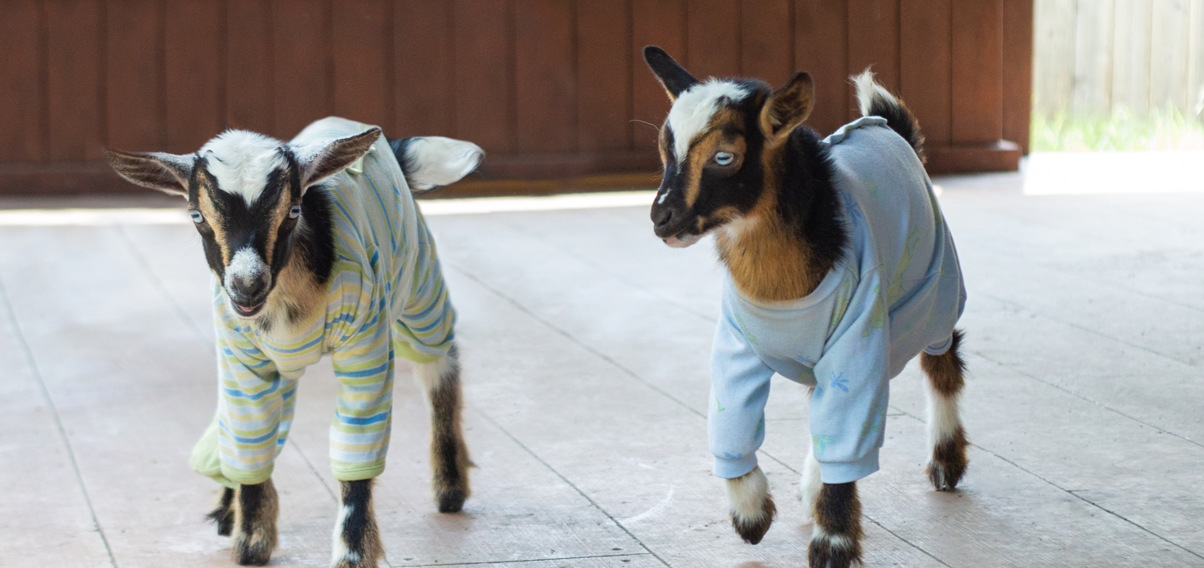 Overnight with Goats