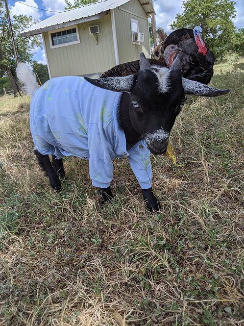 Baby Goats in Pajamas Visit