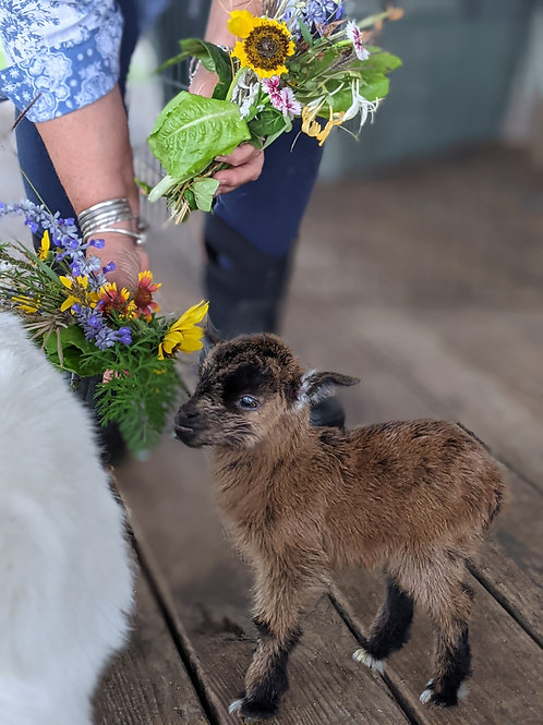 Goat Bouquet