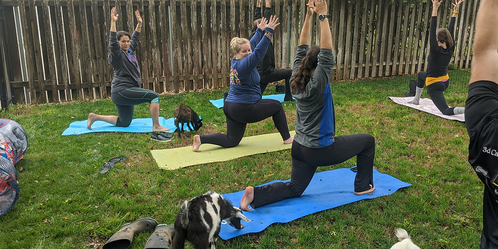 Goat Yoga and Drinks (The Screaming Goat in Spring Branch)