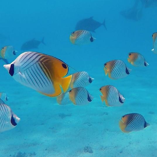 Fish Edit.jpg