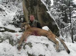 Utah Cougar HUnt