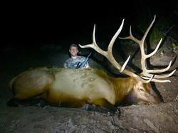 Manti Elk