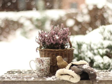 Jak zimą dbać o ogród?