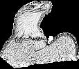 Adler solo TRansparent11.png