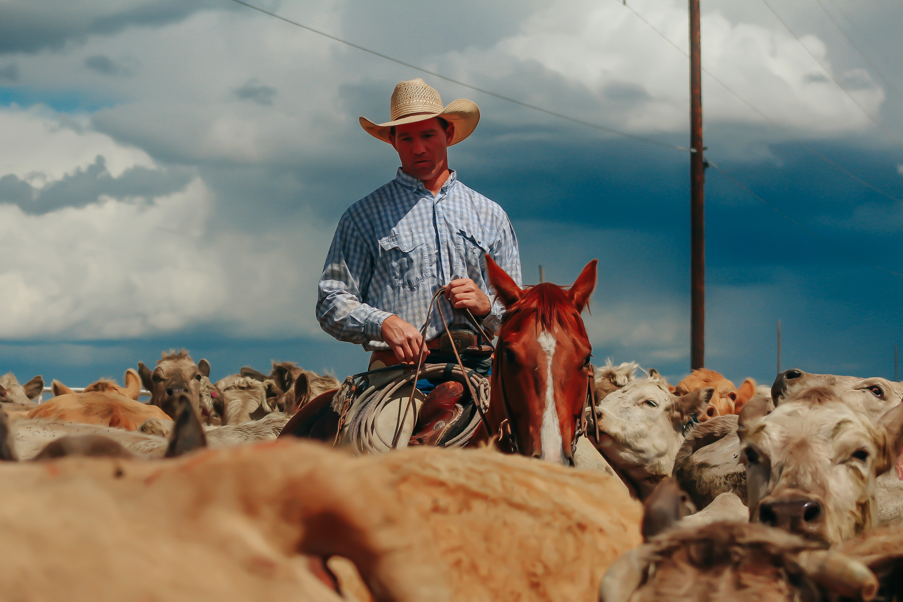 Ranch & Lifestyle Photography