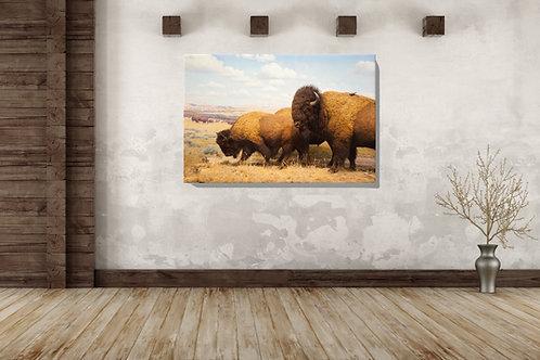 Buffalo Canvas Wrap