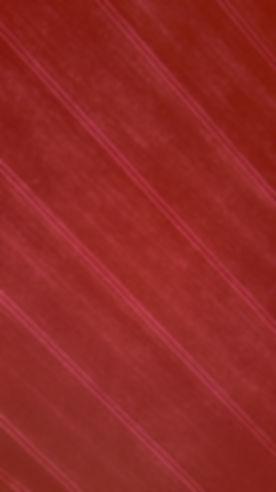 jaromir-kavan-233704_edited.jpg