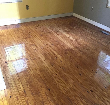 Old Pine After