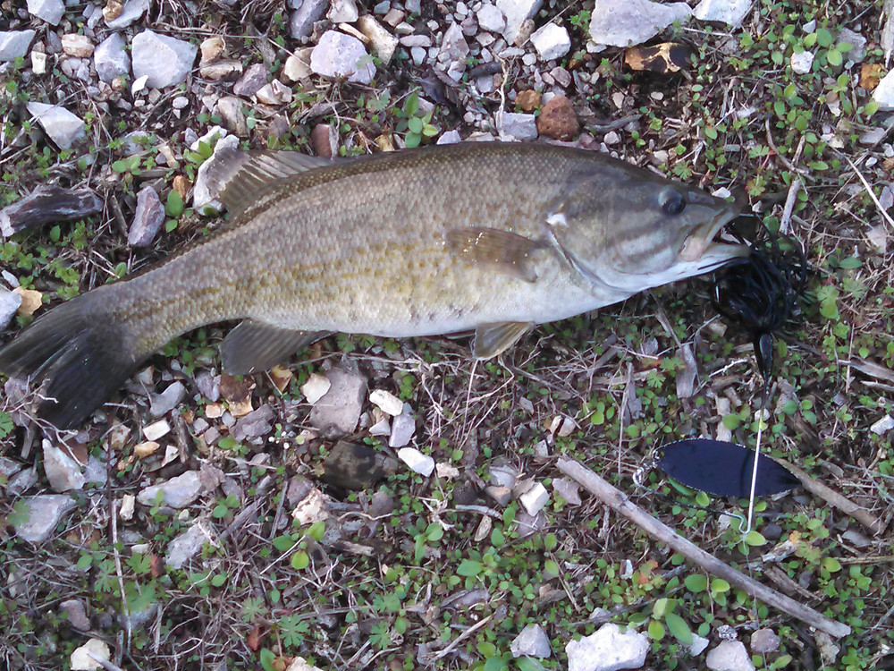 smallmouth04-03-15tablerockground.jpg