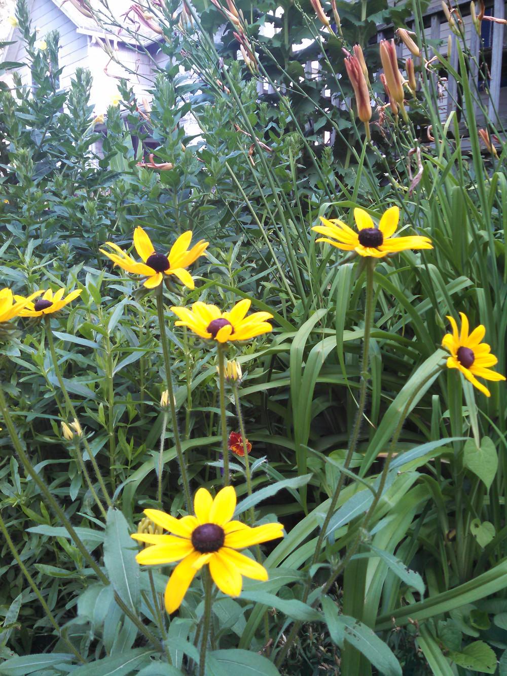 flowers07-02-15.jpg