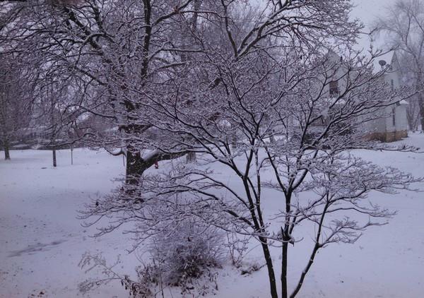 snow01-21-15.jpg