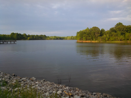 Carlyle Lake: Evening of fish & sounds