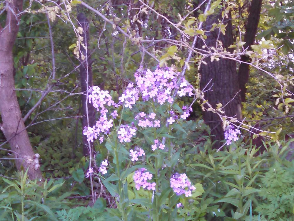 flower05-14-15.jpg