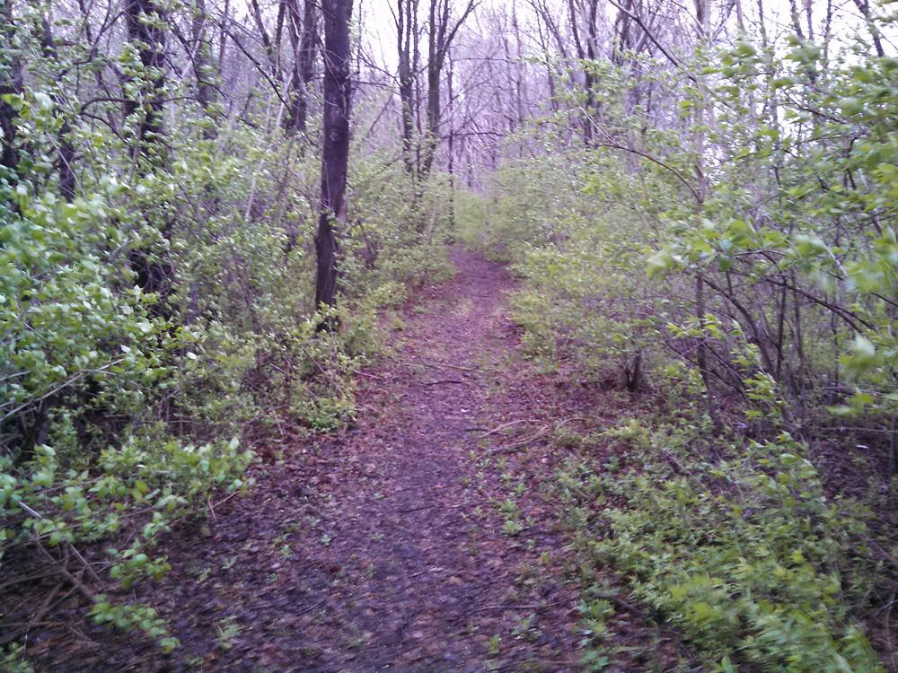 trail04-20-15.jpg