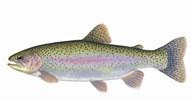 Trout season nears: Indiana fishing