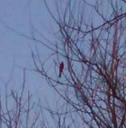cardinal03-15-15.jpg