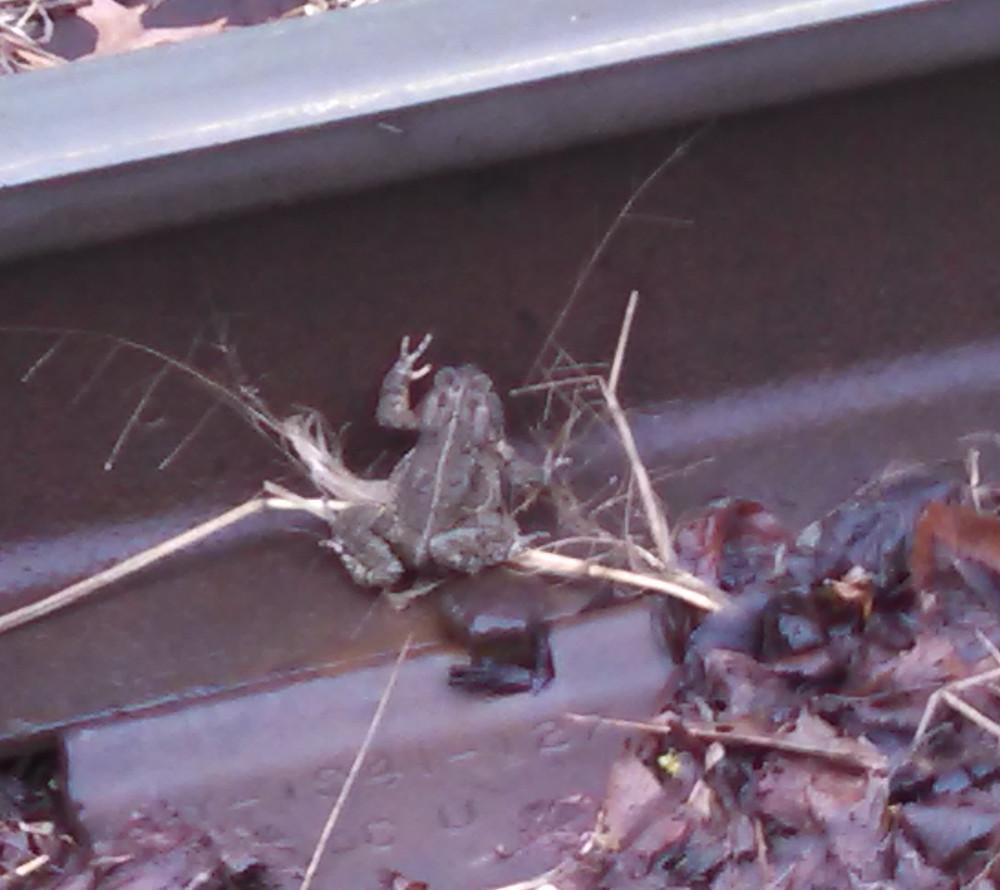 toad05-09-15.jpg