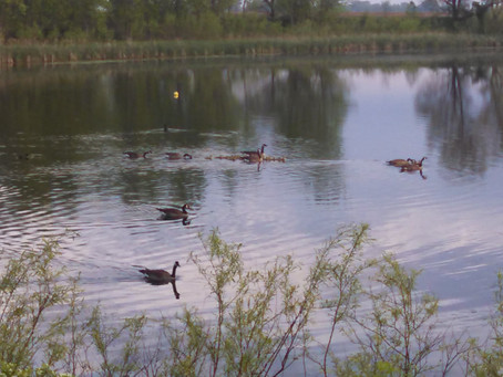 It takes a town pond: Ramble with the Lady