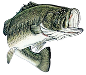 Lake Michigan Bass fishing Tournaments