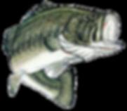 Lake Michigan Bass fishing Tournaments