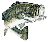 Lake Calumet Bass Tournaments