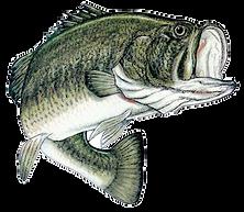 Lake Calumet Bass Tournaments